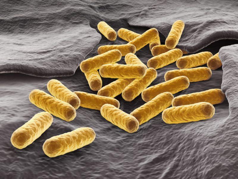 E. coli - how to prevent outbreak