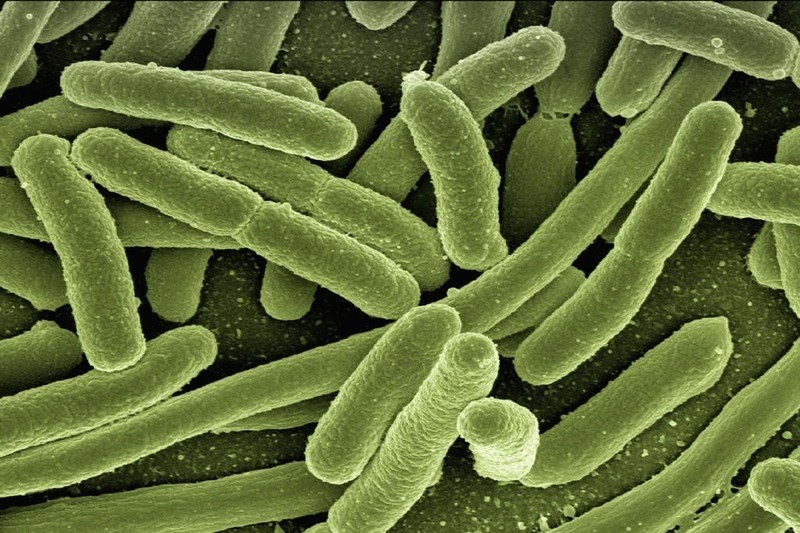 Tackling superbug CPE in your care home